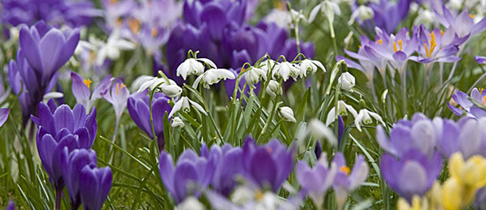 Horber Frühlingsboten